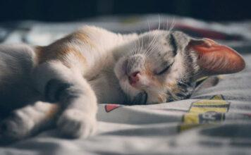 Na co zwrócić uwagę wybierając koce na łóżko